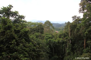 View from canopy walkway